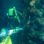 Diver doing a survey of introduced species in port areas. Image from CSIRO CCBY.