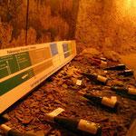Les terroirs viticoles, nombreux en Anjou-Saumur