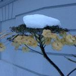 Nathalie Dunaigre (Cette année, la neige a décidé: elle ne fondra pas!), Turlututu Chapeaupointu ('est posé exprès rire pour les besoins de l'intrigue),
