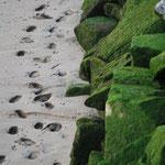 """Sara Mata (Como diría García Lorca... este verde inspira... """"Verde que te quiero verde. Verde viento. Verdes ramas.  El barco sobre la mar. Y el caballo en la montaña·.)"""
