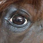 Maeva Dubois (Magnifique ce cheval).