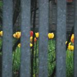Pascale Rocca-serra Felix (Ces fleurs en prison... ça me donne froid dans le dos!).