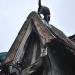 Nini Pixel (Une chatte sur un toit brûlant.... ;o) clin d'oeil à Elisabeth Taylor... ;o)), Anne Oberhauser Poggi (Chatdore), Danièle Aimone (Une jolie photo !).