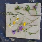 Thementag - Wiesenblumen