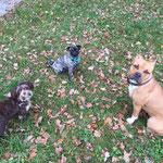 Fortuna, Lu und Kaya