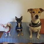 Kaya, Rocky und Baffy