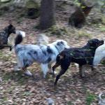 Hundegewusel in der Guntelsey