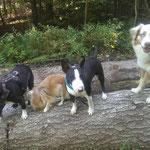 Chelsea, Rocky, Farah und Myla