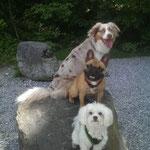 Zeus, Tyson und Myla