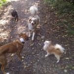 Giorgi, Chelsea,  Myla und Rocky