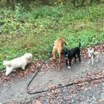 Leoni, Luna, Luca und klein chico