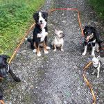 Fin, Emma, Emma, Tosca und Chicco