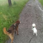Benno und Zeus