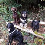 Finn, Lea, Tosca und Josie