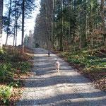 in Höfen im Wald, Luna und Myla