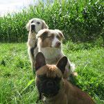drei auf einen Streich, Lenny mit Myla und Tyson