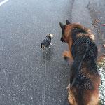 der kleinste mit dem grössten (Chicco mit Arthus)