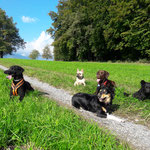 George, Tosca, Emma, Lea und Josie