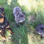 das trio, Chica, Ike und Daisy
