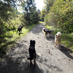 Tosca, Bueno, Myla und Finn