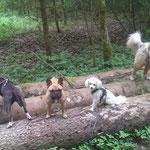 Farah, Tyson, Zeus und Myla