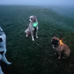 Nebelspaziergang, Dayko, Myla und Tyson