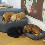Yella, Luna, Oli und Giando
