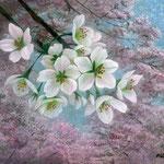 三月桜 W14.0×H18.0