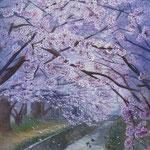 さくら・さくら・3月(千本桜商店街・大和市代官)W22.0×H27.3