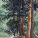 木漏れ日の中 W22.7×H15.8