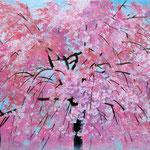 桜、ひらひら W333×H242 水彩、ガッシュ