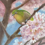 はるめき桜 W158×H227