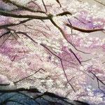 春霞(桜) W38.5 x H14