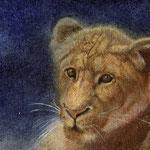 夜に輝く(ライオン)ポストカード大