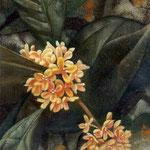 香り霞(金木犀)W18.0 ×H14.0
