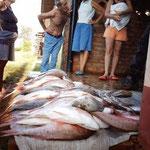 Erfolgreicher Fischfang, Trinidad, Kuba