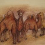Kamele II, 2017, Pastell, 46 x 60 cm
