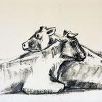 Ruhende Kühe, 2011, Alugrafie, 20x30 cm