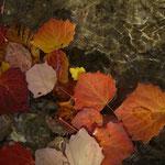 l'automne sur l'eau