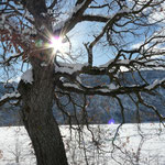 la neige sous le soleil