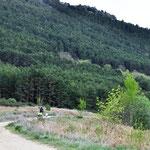 Pinares del Valle del Arroyo