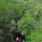 Vias Verdes. La Senda del Oso