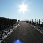Weinberge auch im Winter schön