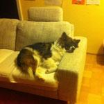 Cashira hat die Couch erobert