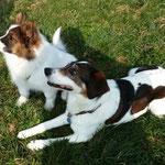Chantico mit Pflegehund