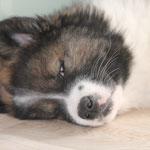 Schönheitsschlaf, denn heute ist Fotoshooting!!!!!