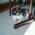 Cadinka genießt ihre erste Möhre im neuen Heim