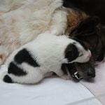 Chantico kuschelt mit Mama