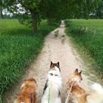 Spaziergang durch die Rheinauen