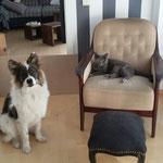 Wilbur mit Katzen-Kumpel